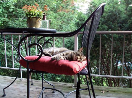 Cat nap on the deck! #pets #deck #porch