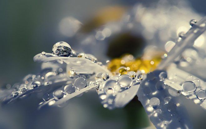 Rainy Wallpaper Beautiful Wallpaper Hd Rain Wallpapers Daisy Wallpaper
