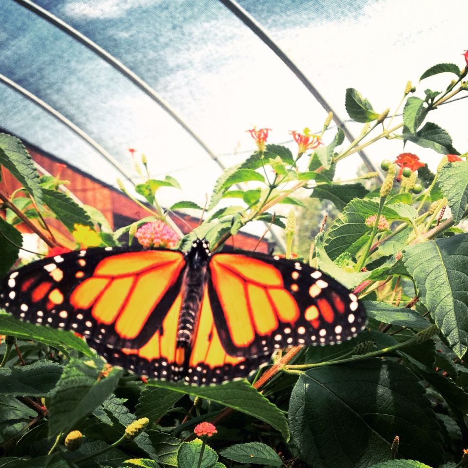 Butterfly garden in Appleton, wi Butterfly garden