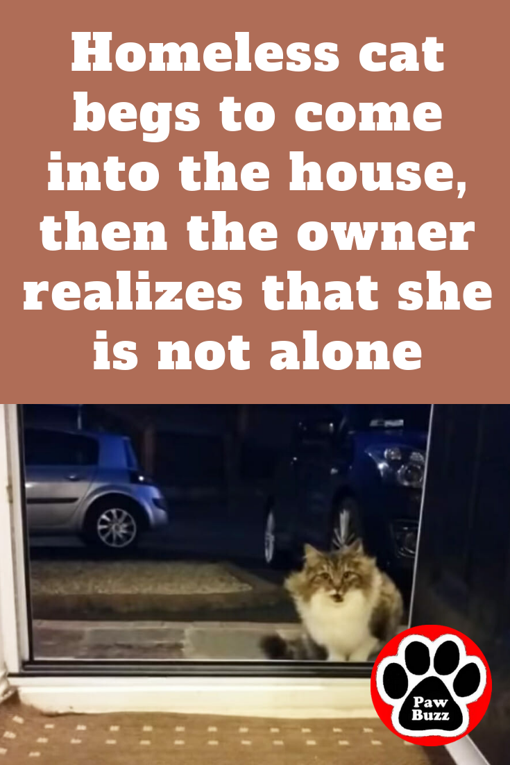 Homeless Cat Begs To Come Into The House Then The Owner Realizes That She Is Not Alone Cats Bull Mastiff Puppies Mastiff Puppies