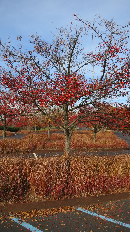 Parking lot | DIA: Beacon | Meditation garden, Parking lot