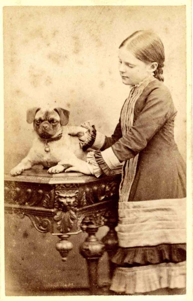 These Adorable Were Taken In The Late 19th Century That Show Dogs