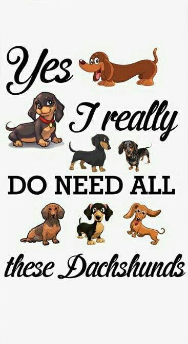 Dachshund Dachshund Funny Dachshund Dachshund Dog Jokes