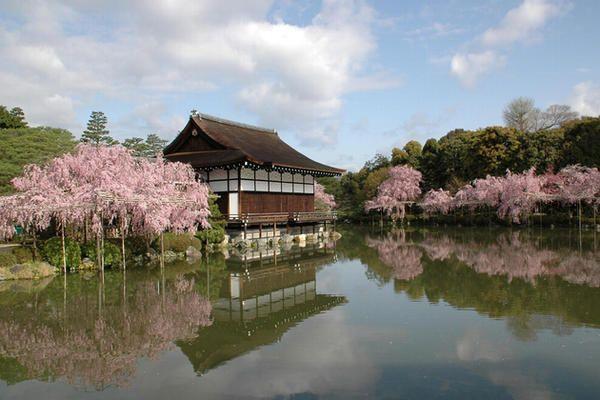 SAKURA Heian-Jingu in Kyoto JAPAN