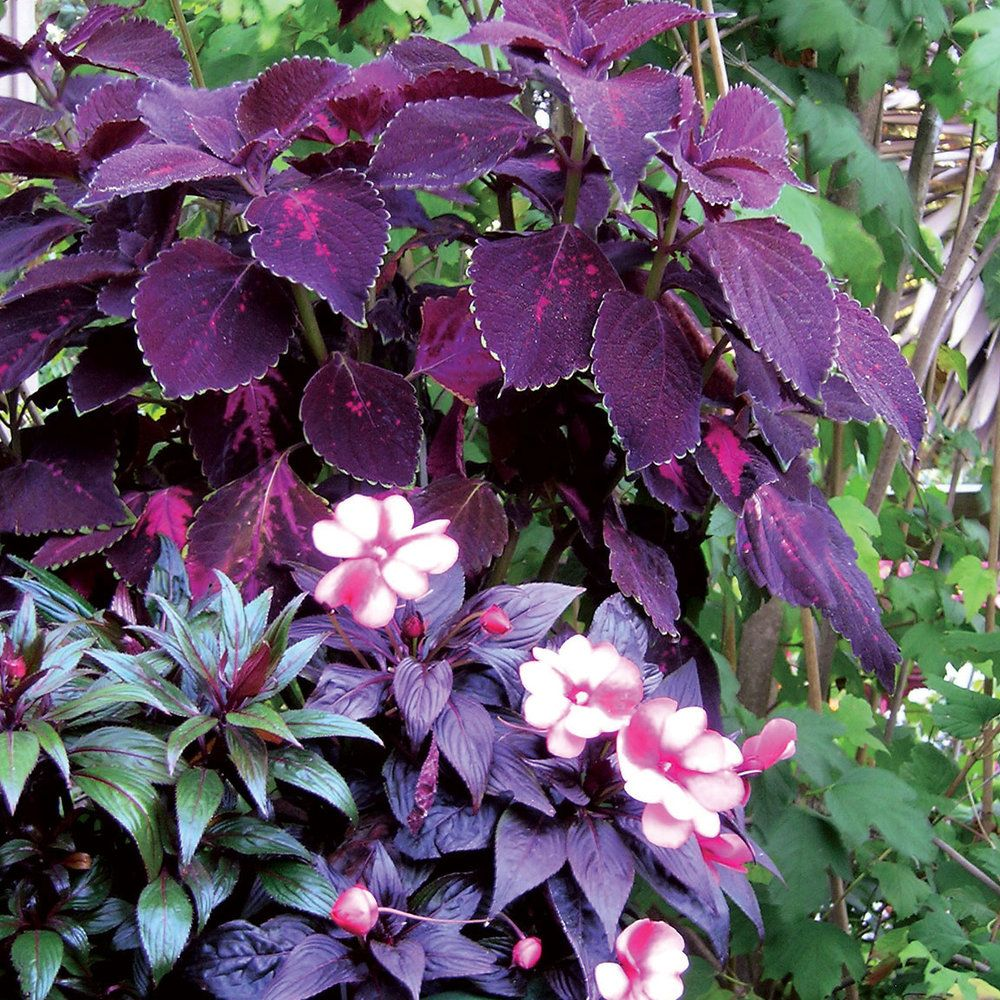 These Shade Tolerant Plants Have Beautiful Foliage And Flowers That