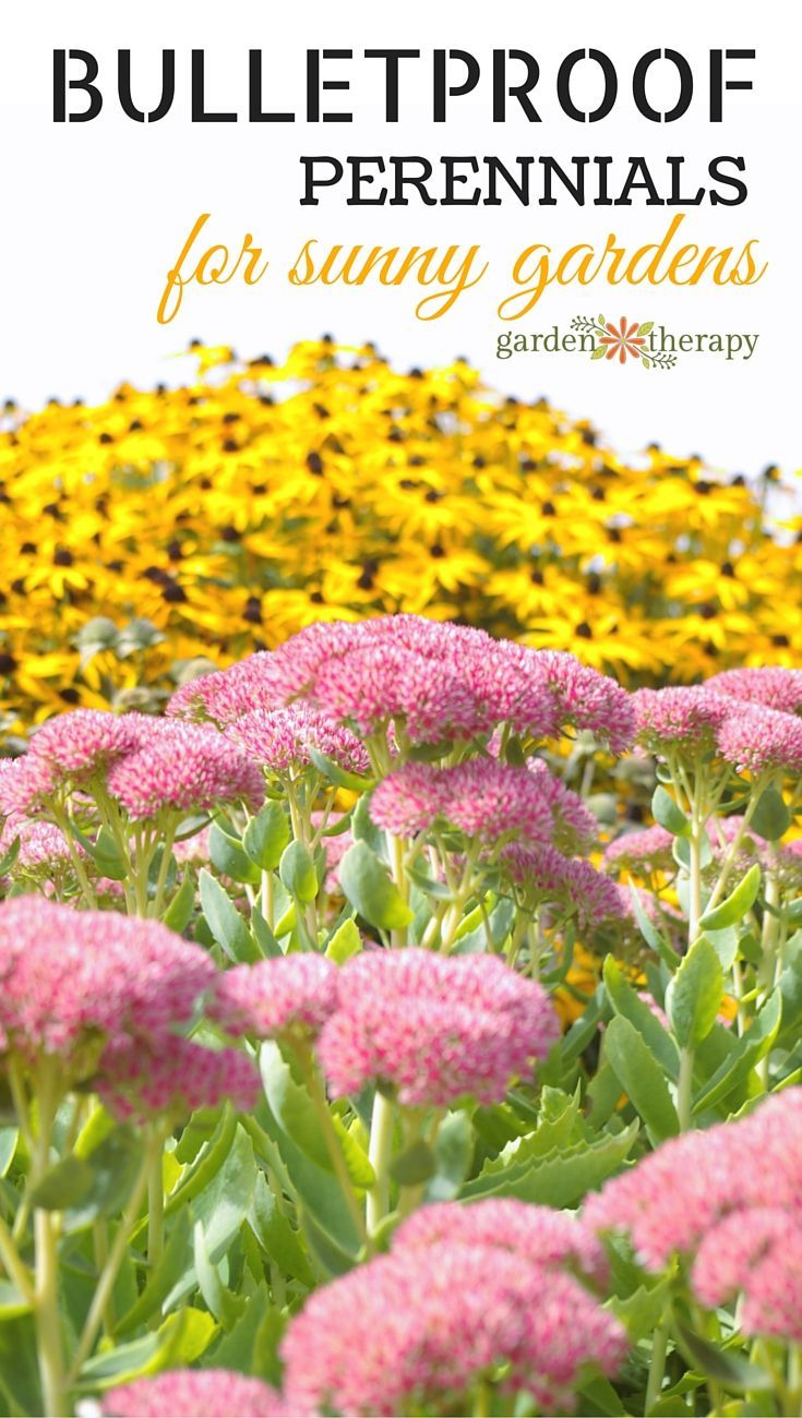 These Hardy Perennials Are The Toughest On The Block Hardy