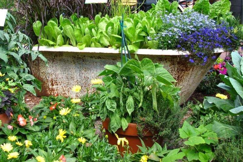 Alte Badewanne Bepflanzen Kreative Idee Fur Gartendeko Jardin
