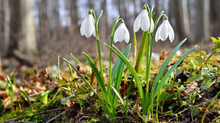 Das Sind Die Top 10 Der Frühlingsblumen Für Garten Und