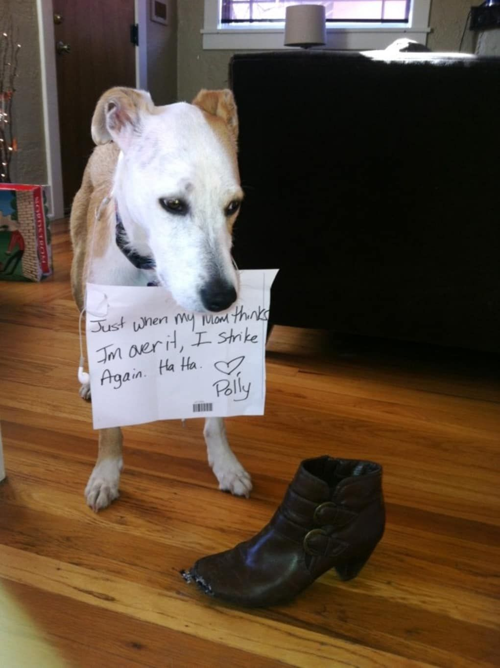 35 Of The Most Hilarious Pet Confessions Personalized