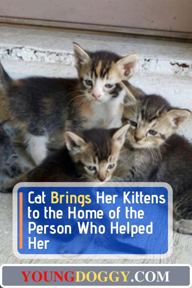 Cat Brings Her Kittens to the Home of the Person Who Helped Her #animalrescue