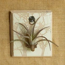 Tillandsia air plant holder tillandsia plante a rienne for Plante fille de l air