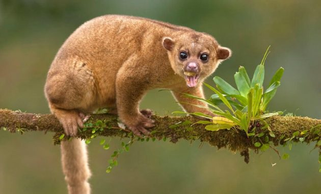 10 Amazing Animals That Start With The Letter K Animals Weird Animals Endangered Animals