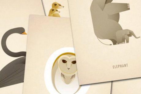 Marcus Reed - Artista cria alfabeto com formas de animais