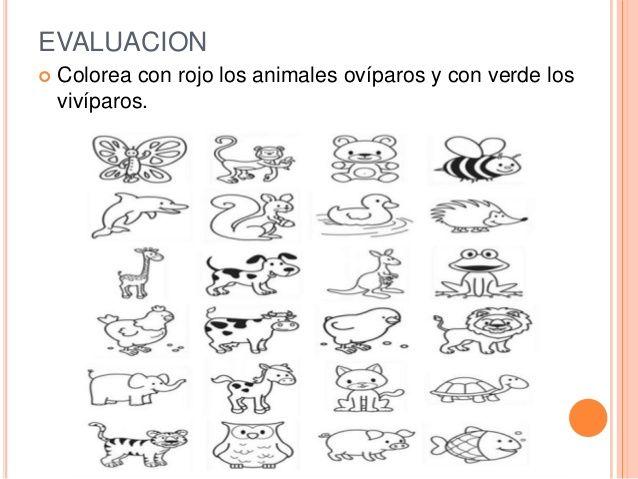 animales viviparos y oviparos para colorear - Buscar con Google ...