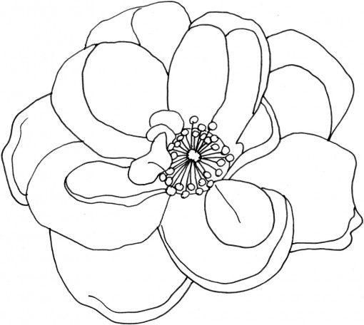 Ausmalbild: Blume/ Blüte / Rose | flower coloring | Pinterest ...
