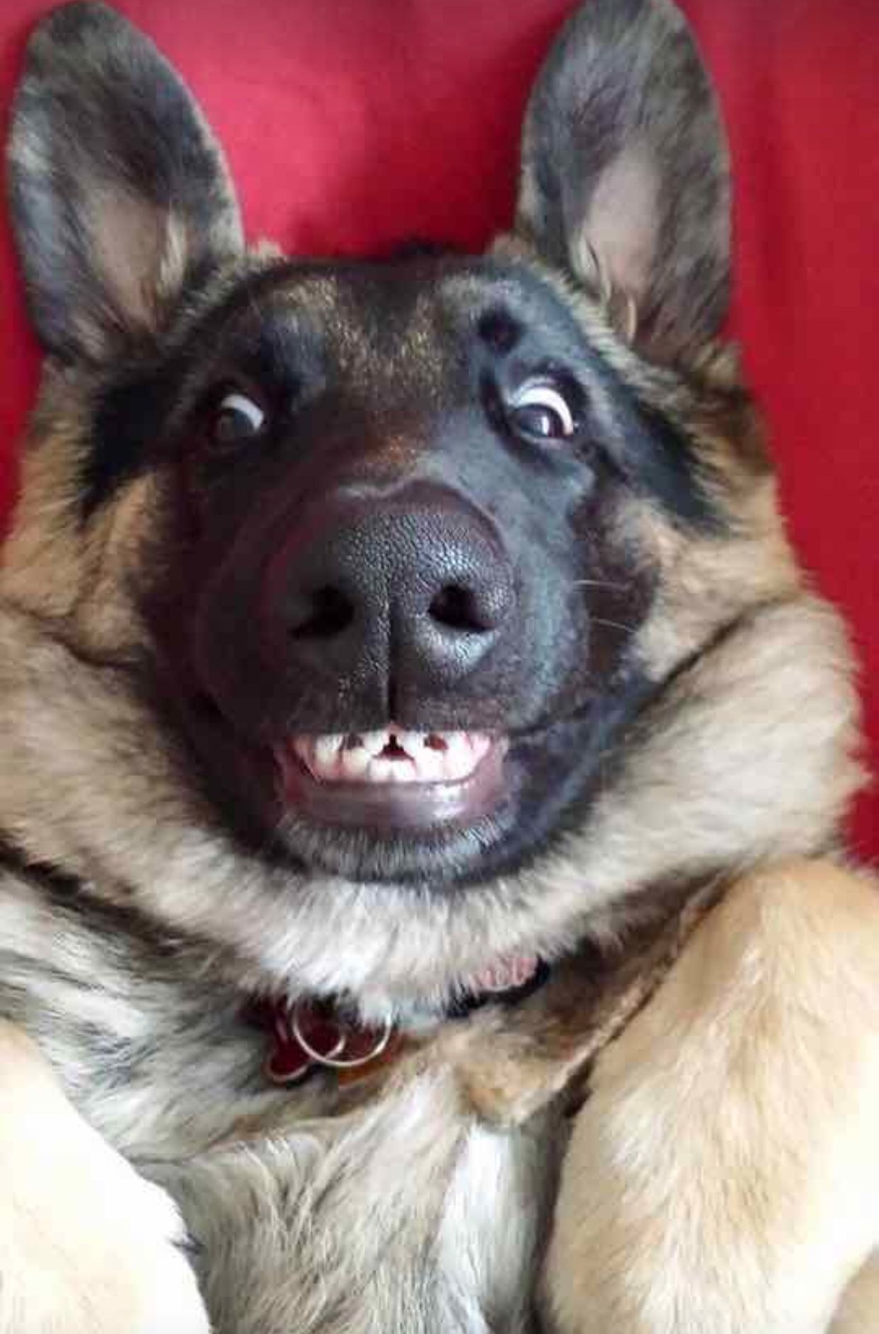 Just keep smiling Funny animal pictures, Funny dog