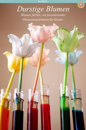 Durstige Blumen - Blumen färben mit Lebensmittelfarben (Ein einfaches Experiment für Kinder