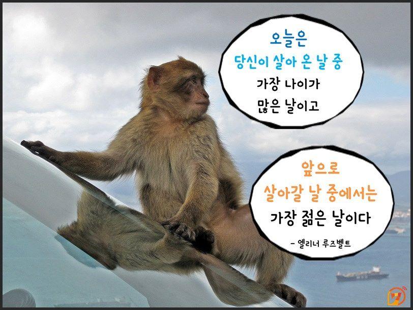 원숭이해_현실적인명언10가지05