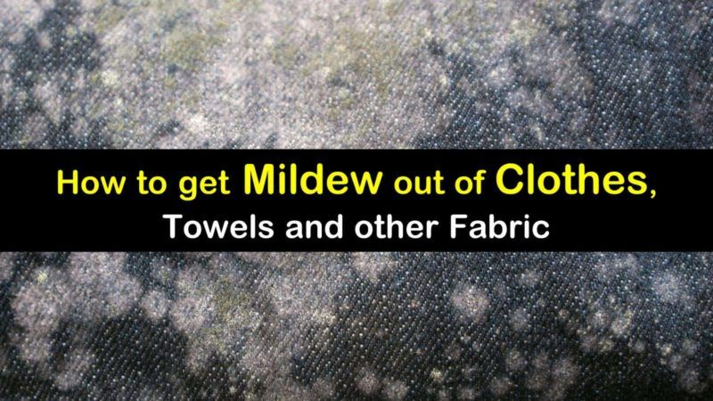 9 Smart Simple Ways To Get Mildew Out Of Clothes In 2020 Mildew Remover For Fabric Remove Mold Stains Remove Mildew Stains