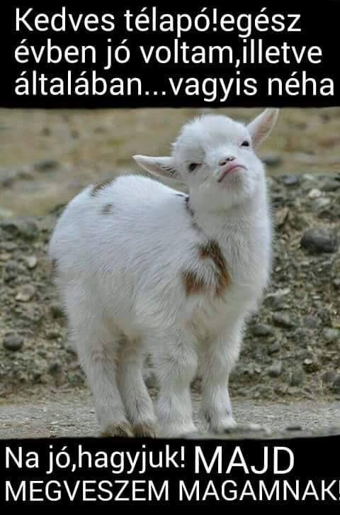 Quotes About Goats Én Eskü Jó Voltam.na Jó  Állatok  Pinterest  Humor Funny .