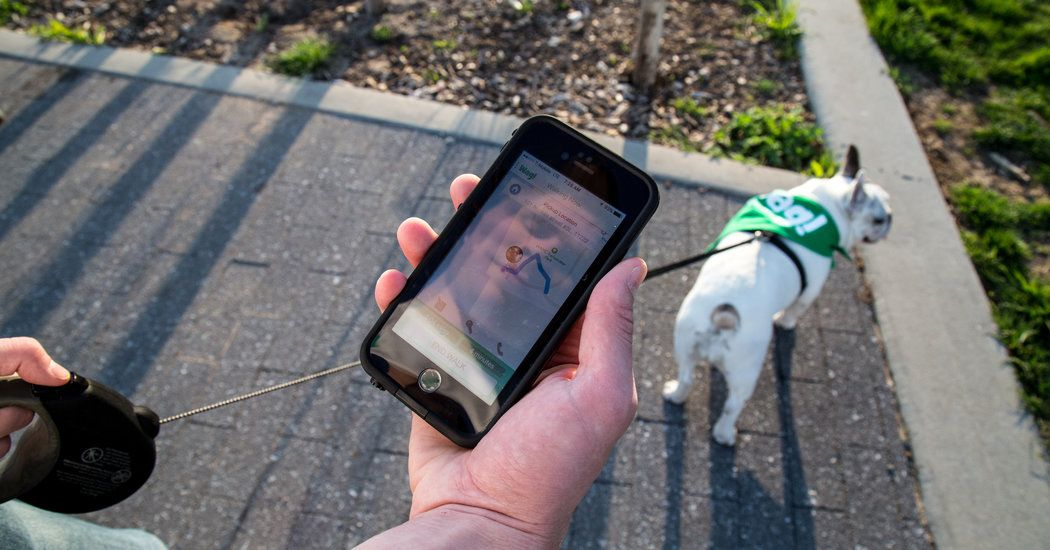 Was Your Dog Walked? Your Phone Can Show You Dog walking