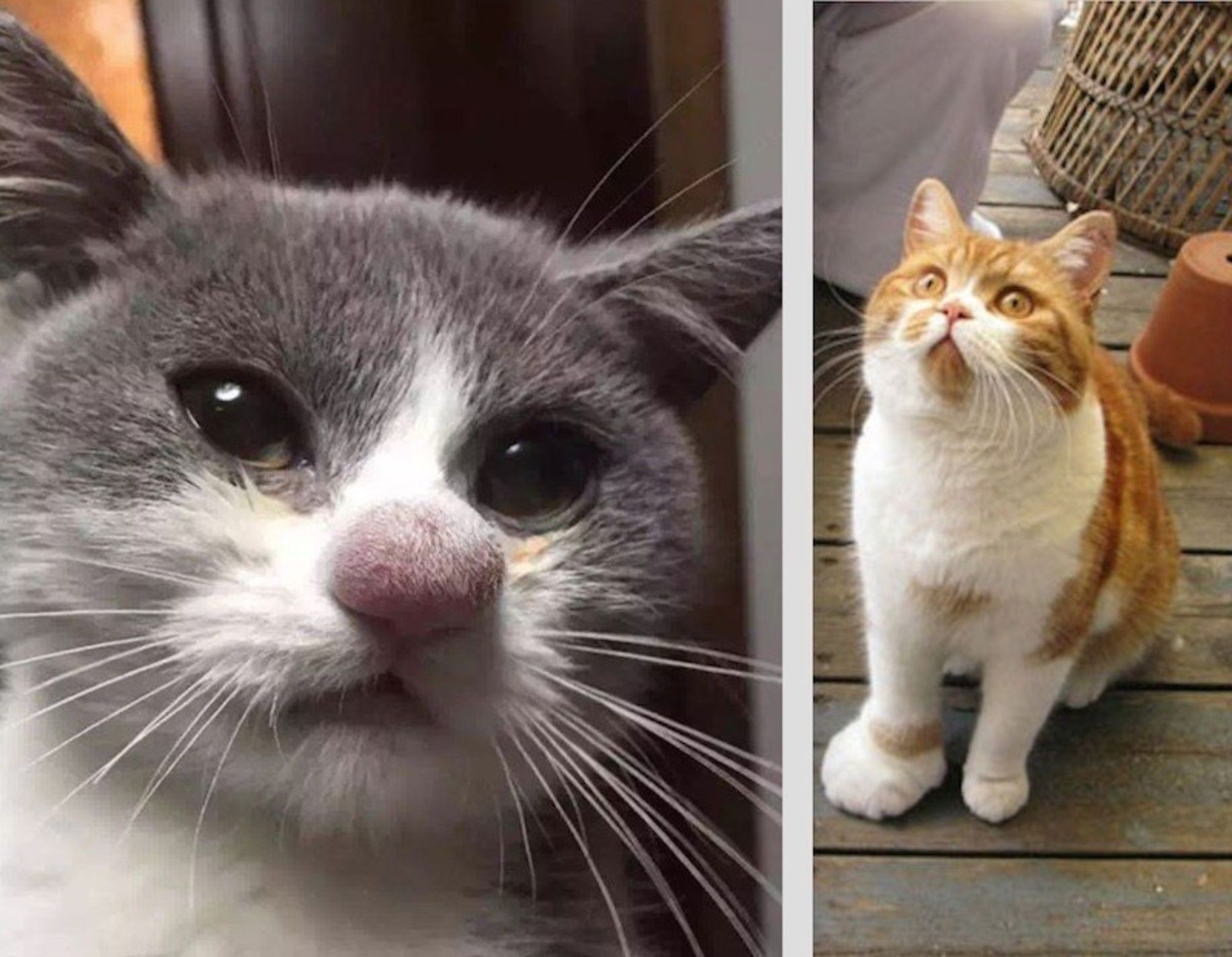 9 Stung Cats That Got Into It With A Bee And Lost Cats