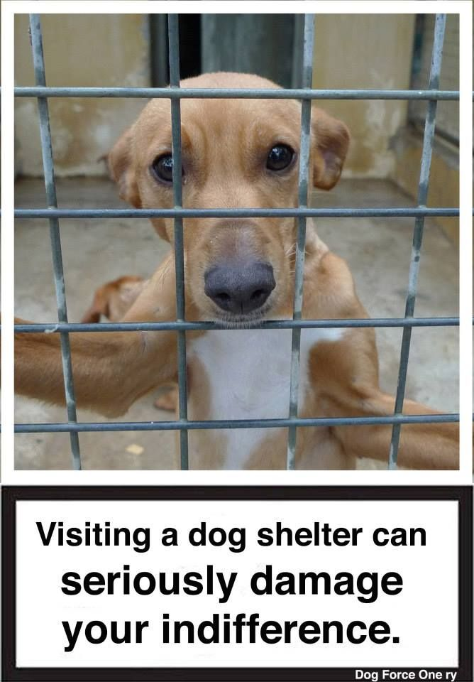 Support Shelters Took A Look Of The Dogs For Adoption Pins In Us So Many Share And Pin And Adopt It Someone Dog Adoption Dogs Animal Shelter