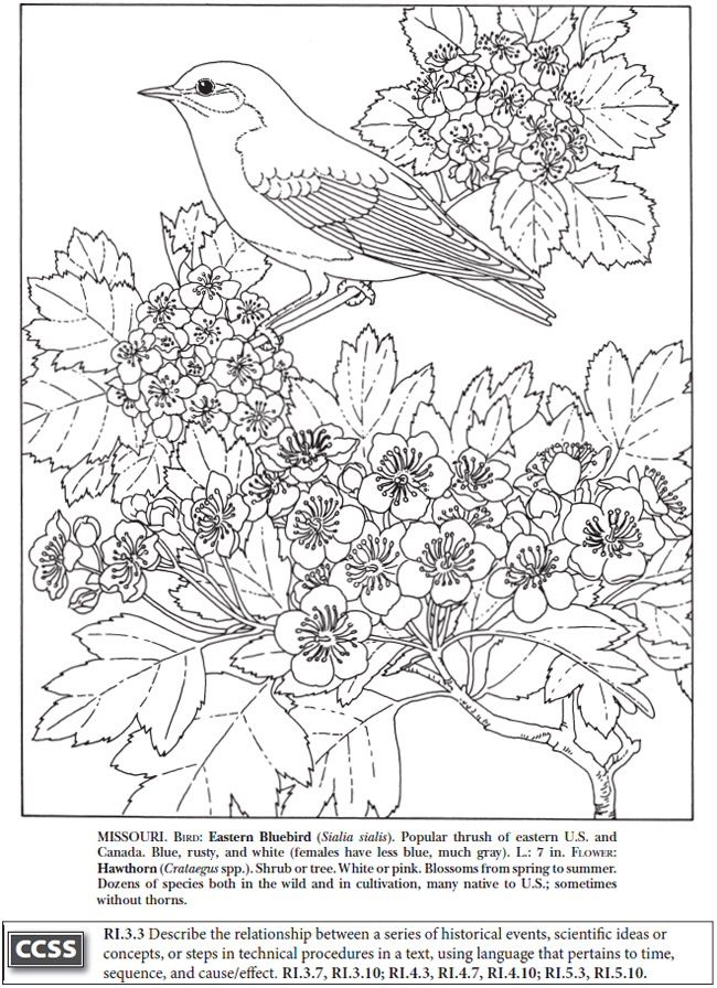 BOOST State Birds And Flowers Coloring Book Dover Publications Samples