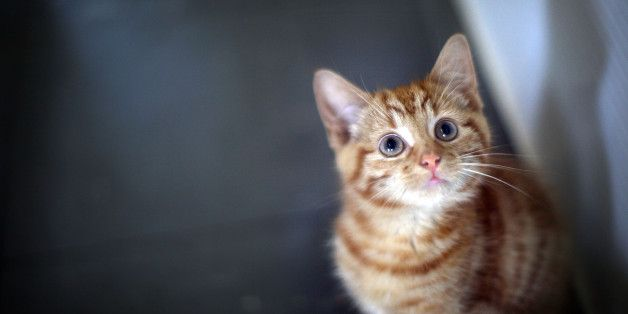 13 Reasons Owning A Cat Is Worth Every Hairball