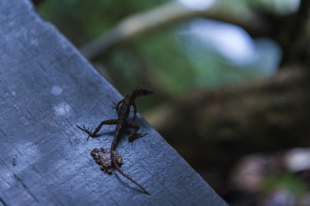 ニホントカゲの飼育方法をわかりやすく解説 ニホントカゲ アゴヒゲトカゲ カナヘビ