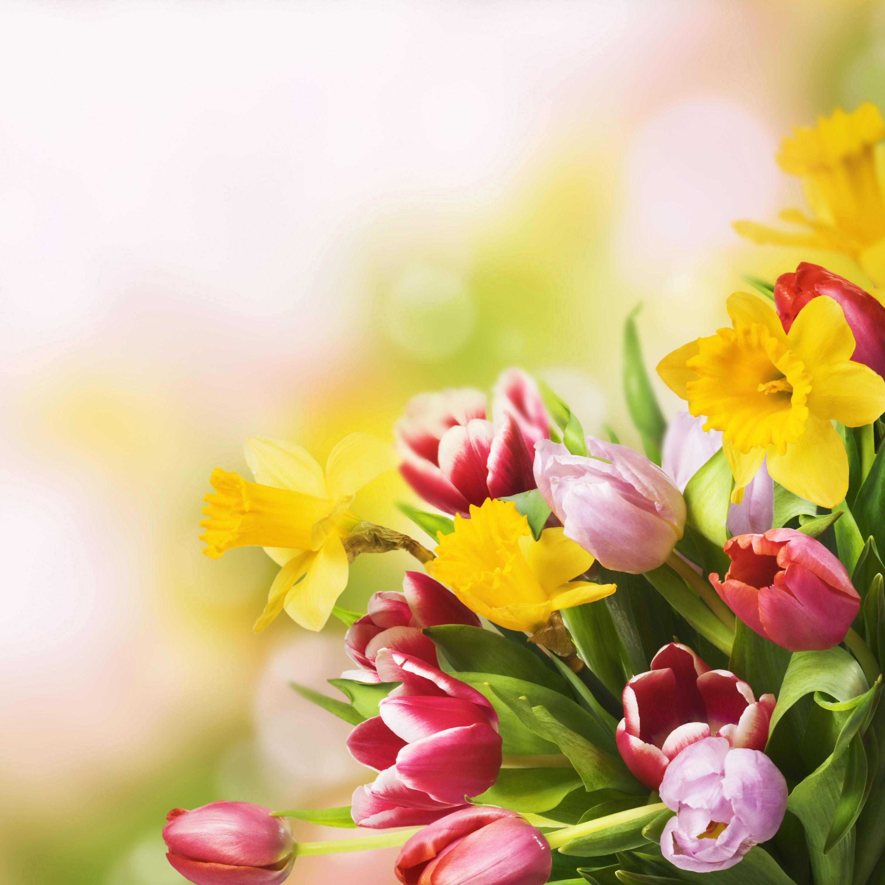 С весной открытка с тюльпанами