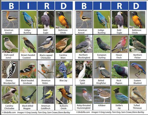 Free Bird Education Tools For Teachers Bird Identification Bird Information About Birds