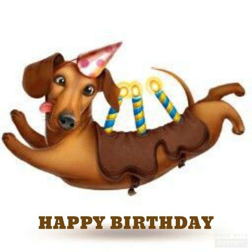 Pin By Tammy Martinez On Happy Birthday In 2020 Dachshund Birthday Happy Birthday Dachshund Birthday Greetings Funny