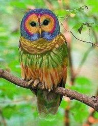 """NOT WHAT YOU THINK: This little guy has been making the rounds identified as a """"Rainbow Owl"""" -- NOPE.  Wish this were real, but unfortunately, it is actually a Photoshopped photo of a barred owl.  See the original photo, without the color enhancements, here (http://pinterest.com/pin/175218241722966419/ ) and both, with the false info and corrections, at the click-through."""