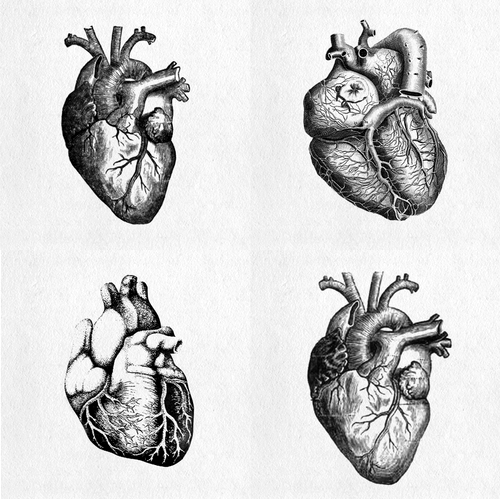 Pin By Clare Gamble On I Heart Sacred Hearts Anatomy Art Anatomical Heart Tattoo Heart Tattoo