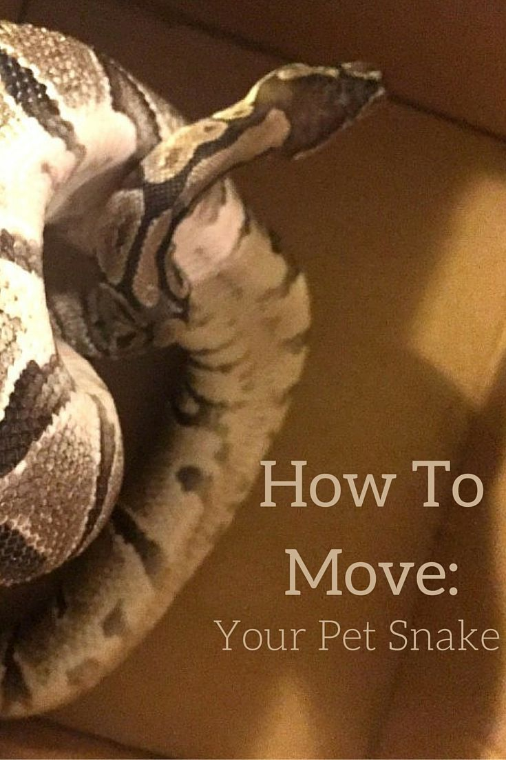 Tips For Moving Your Pet Snake Pet Snake Reptiles Pet Pets