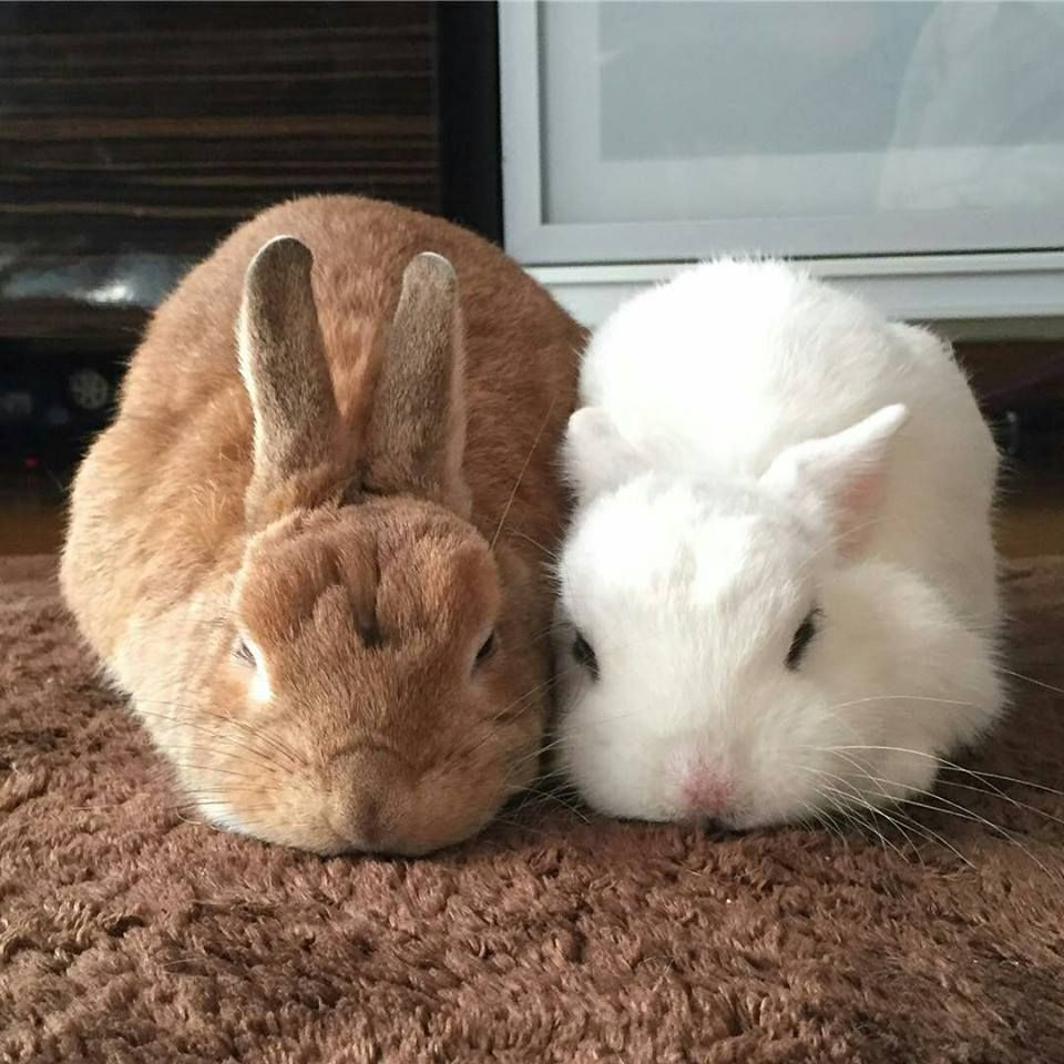 Pin By Anna Wi On Rabbits Together Cute Bunny Bunny Pictures Cute Animals