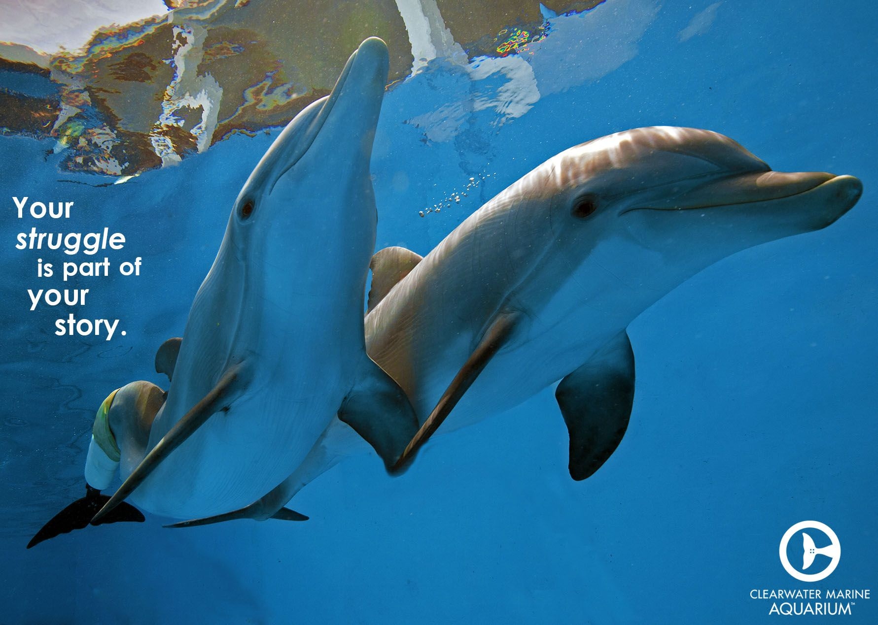 40 best winter u0026 hope dolphins images on pinterest dolphin tale