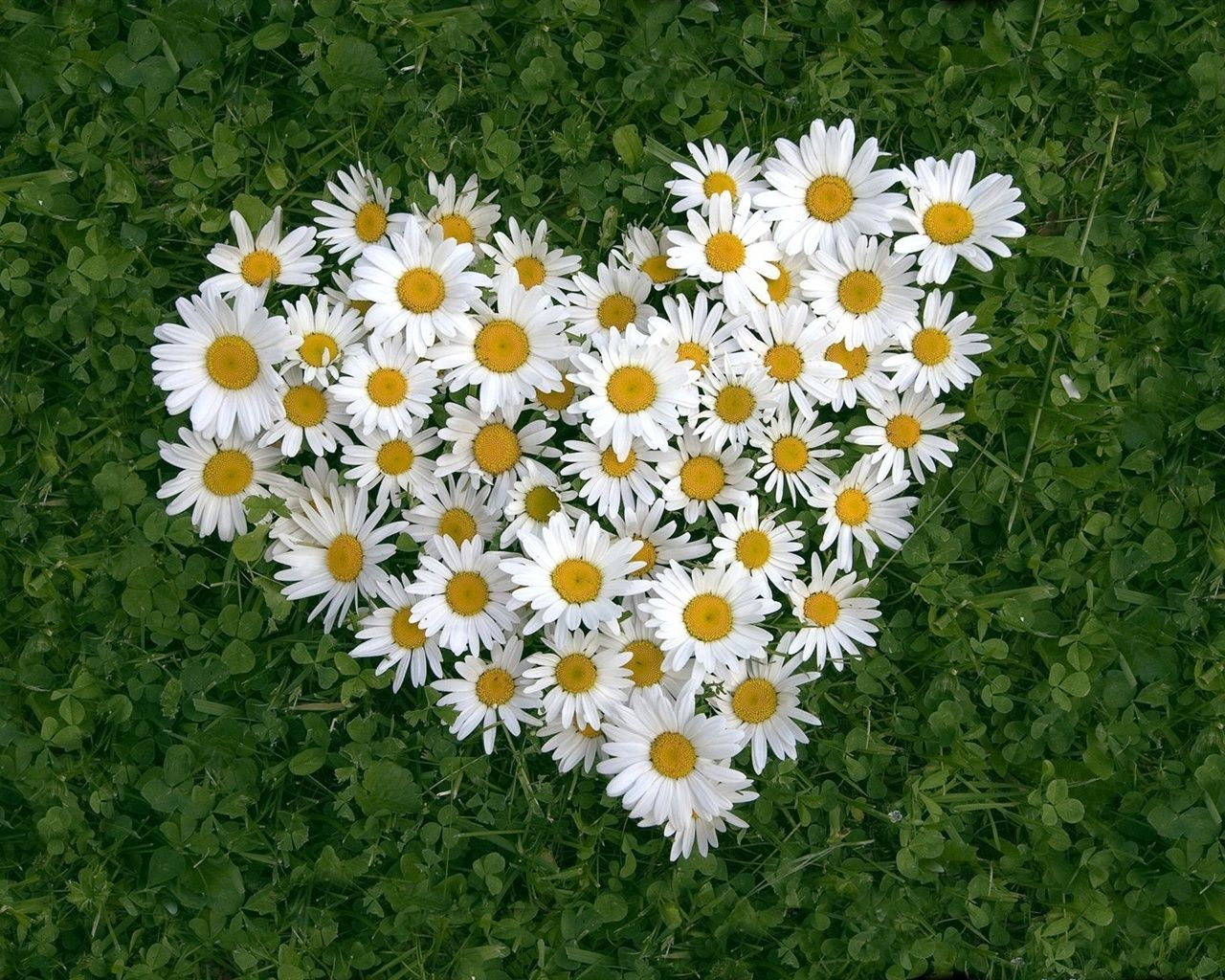 Girl scout daisy flower heart on a bed of lucky green clovers girl girl scout daisy flower heart on a bed of lucky green clovers izmirmasajfo