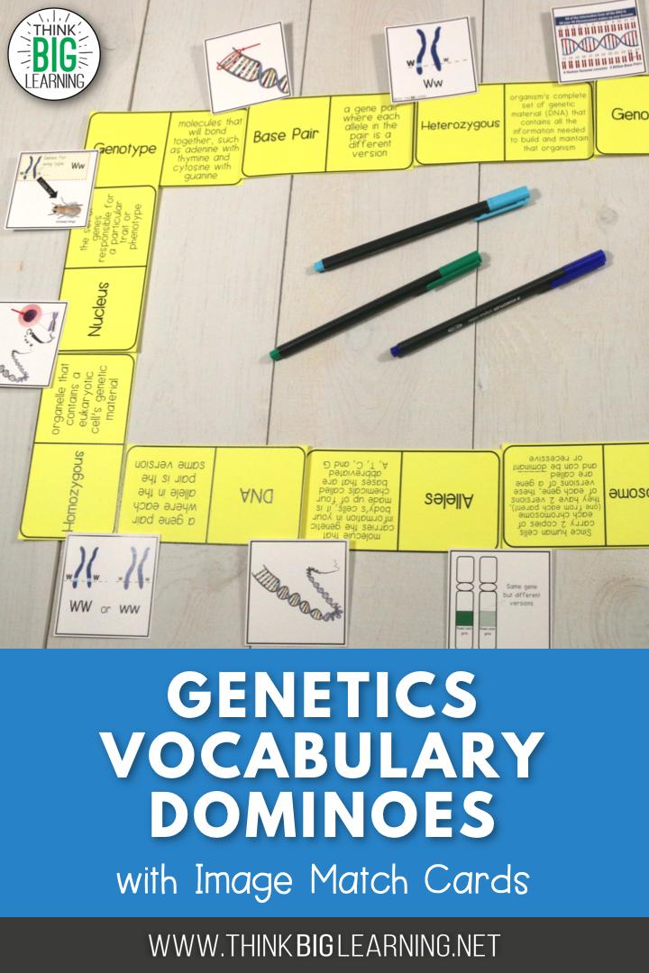 Basic Genetics And Chromosomes Vocabulary Dominoes