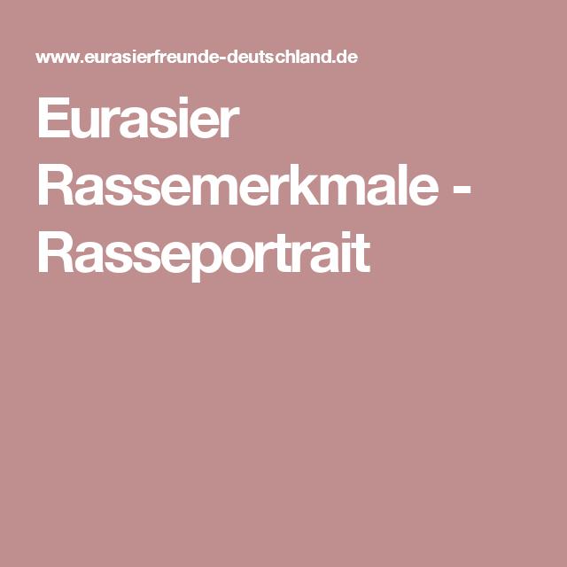 Eurasier Rassemerkmale Rasseportrait Eurasier