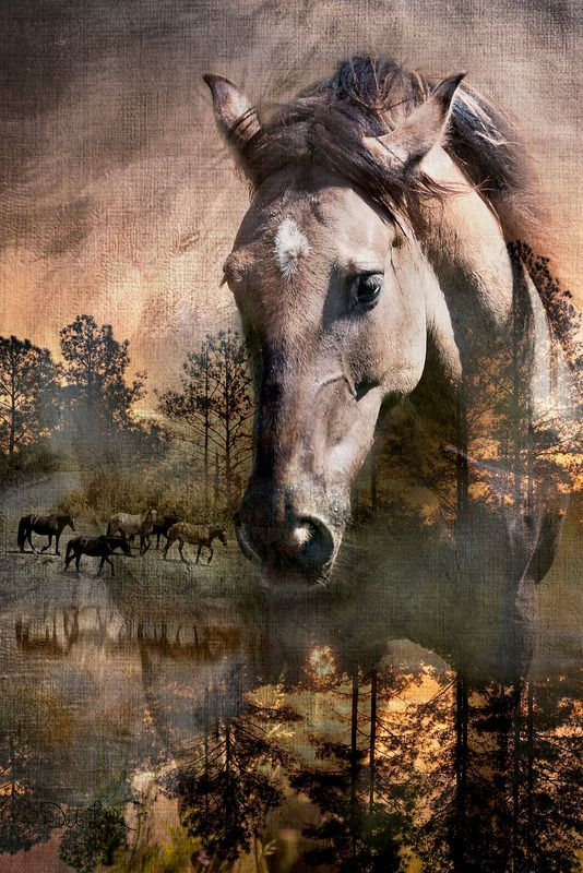 Finally Home – Once Wild Horses – Deb Little Photography
