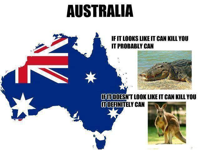 1383932 569702663102344 1501931490 n pinterest australia aussie memes and memes. Black Bedroom Furniture Sets. Home Design Ideas