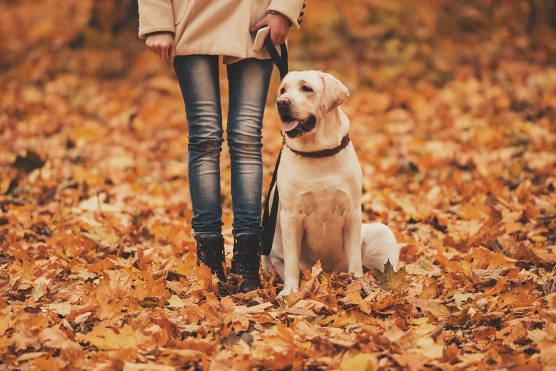 Pet Therapy 8 reasons why our pets are good for us Atmo