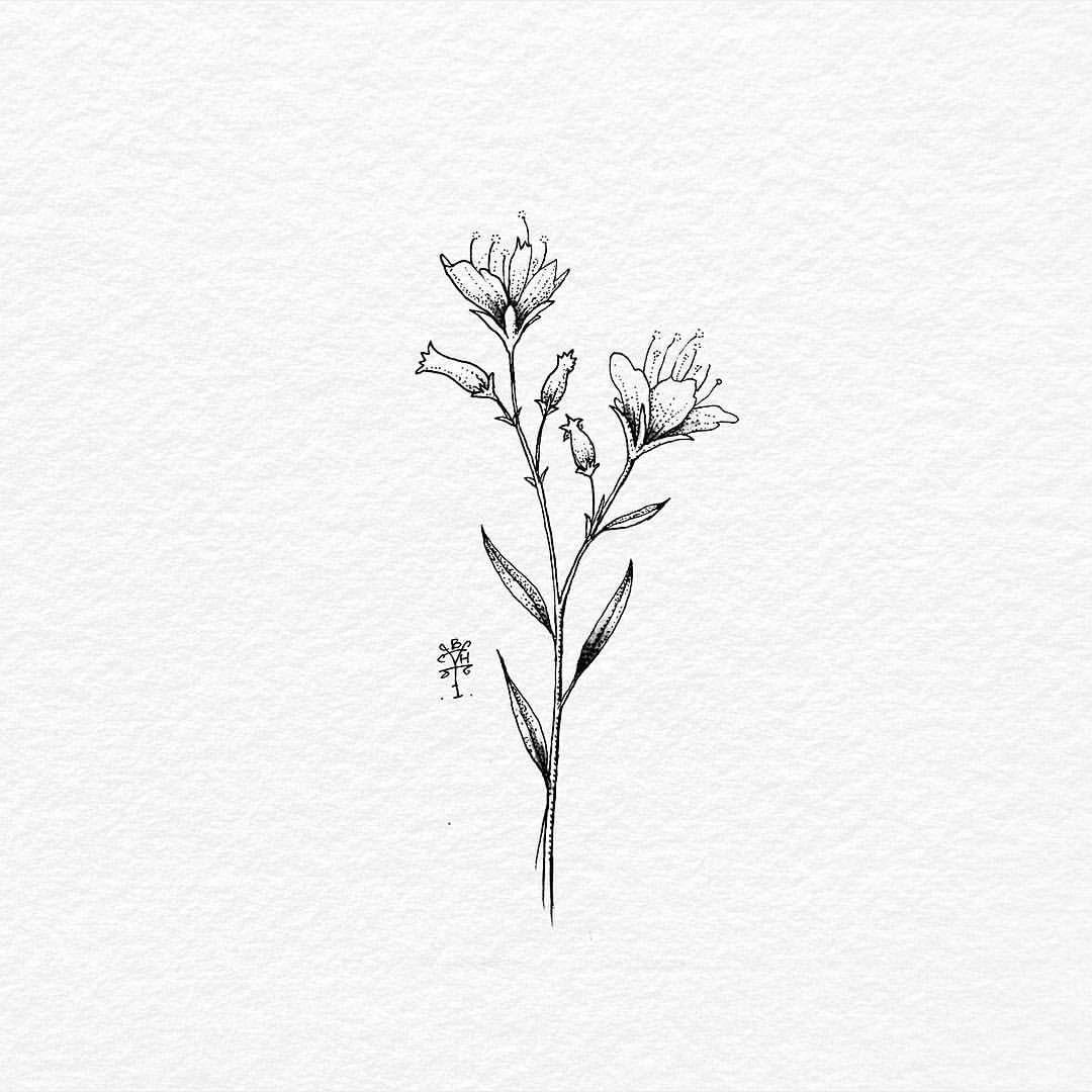 Wild Flower Ink On Paper It S Friday Night Hey Botanical Balitattoo Tattoolife Flash Flower Line Drawings Honeysuckle Tattoo Wildflower Tattoo