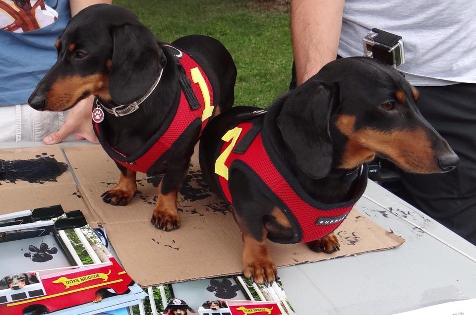 Wienerpawlooza 2014 Wiener Dog Dachshund Love