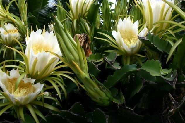 10 самых редкоцветущих растений (11 фото) | Растения ...
