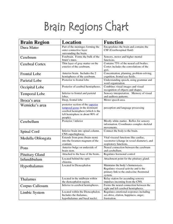 Brain Structure And Function Worksheet Free Worksheets Library ...