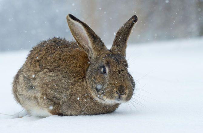 6 Reasons To Upgrade To Rebelmouse From Wordpress Animals Rabbit Photos Arctic Sea