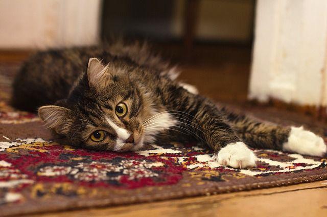 C mo limpiar las alfombras antes de guardarlas para el a o - Como limpiar las alfombras en casa ...